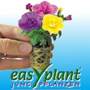 easyplant® jonge plant